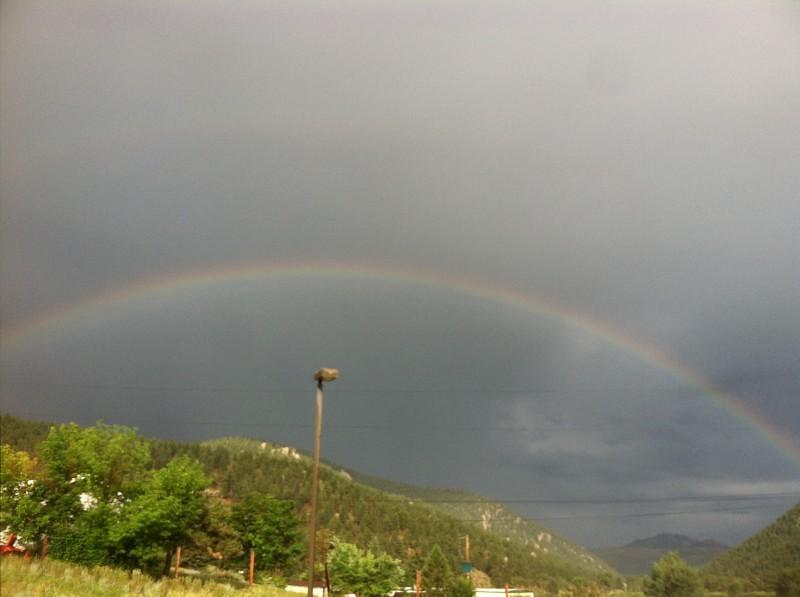 Pine Colorado Rainbow
