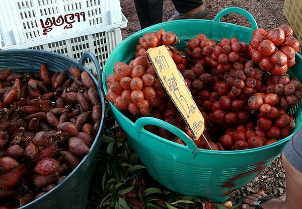 Snake Fruit - Indonesia