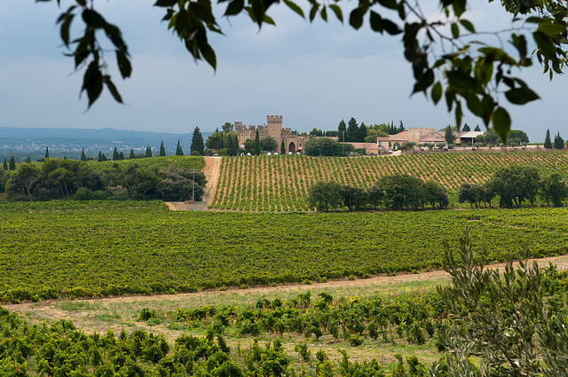 France vinyards