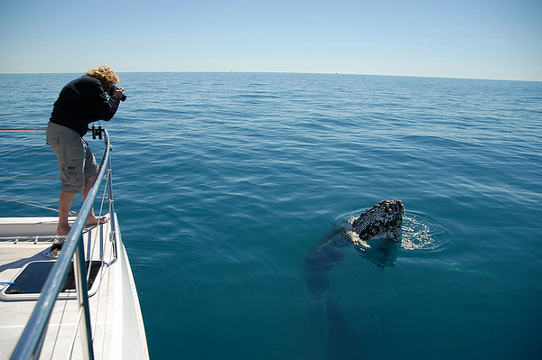 Cairns AustraliaWhale Watching