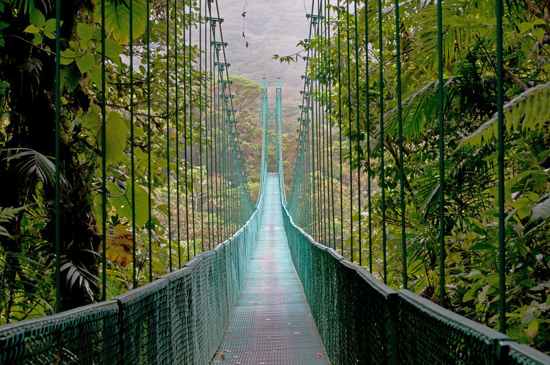 Costa Rica's Monteverde Cloud Forest