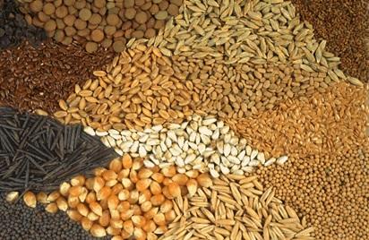 Homestead Seeds