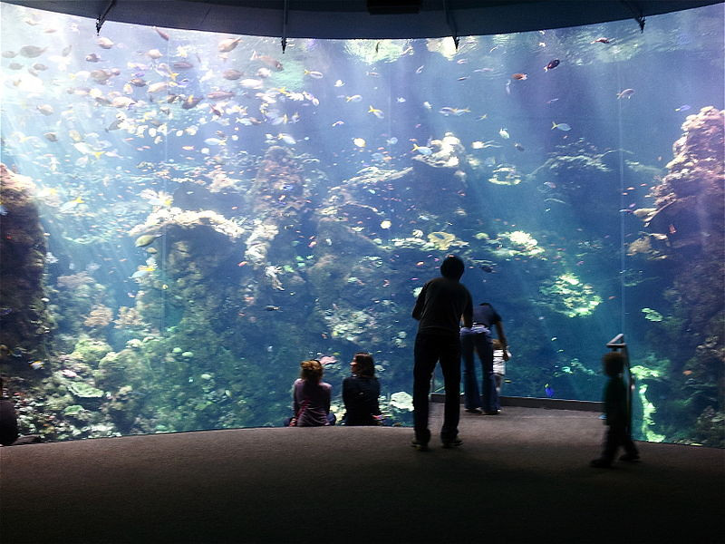 Philippine Coral Reef at California Academy Sciences