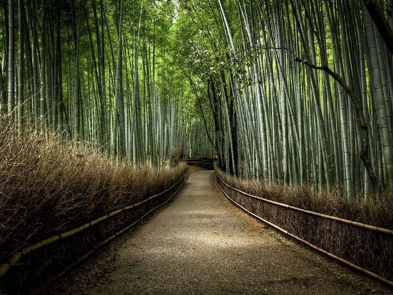 Bamboo Forest Japan