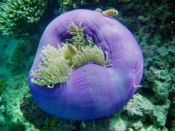 Cairns AustraliaGreat Barrier Reef