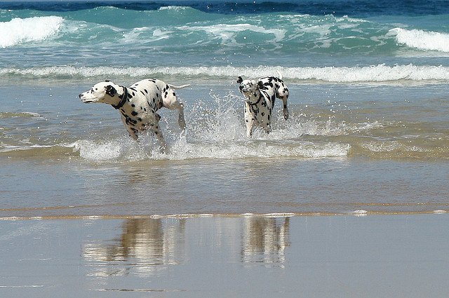 Best Cornwall Beach For Your Dog