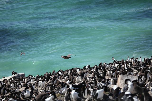 Explore Falkland Island, South Georgia Island and Antarctica