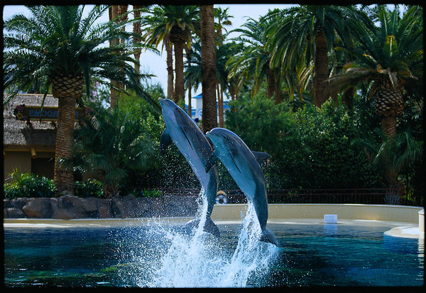 dolphins in Las Vegas