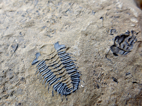 Burgess Shale Fossil Site