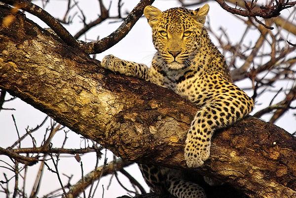 Africa Wildlife Parks