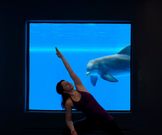 yoga with dolphins