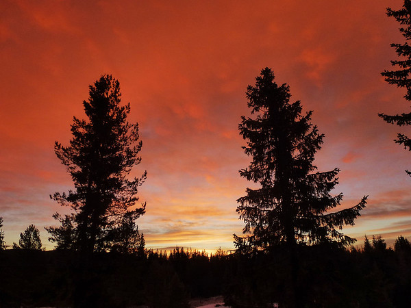 woods of Norway