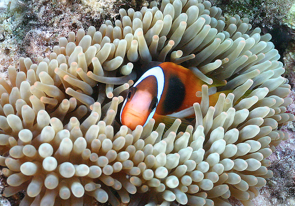 Scuba Diving in The Great Barrier Reef, Australia